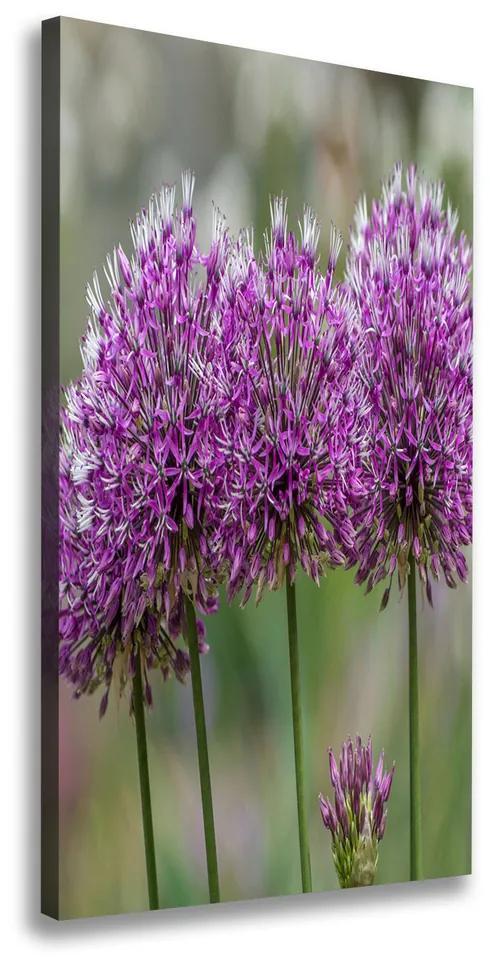 Print pe pânză Flori de usturoi