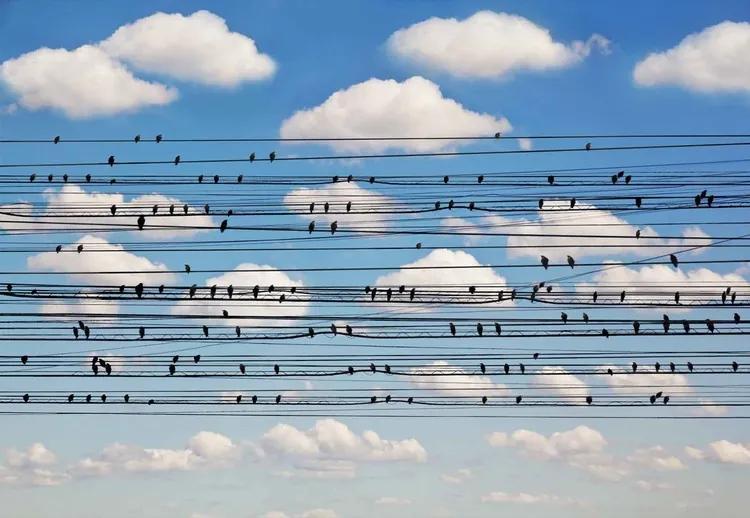 Cantus Arcticus, Concerto For Birds Fototapet, (254 x 184 cm)