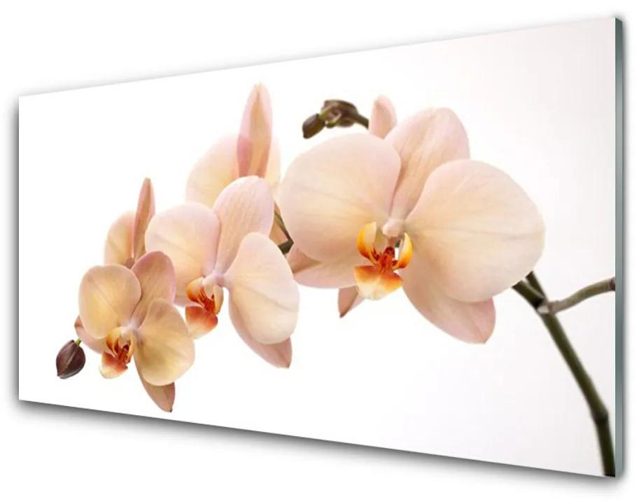 Tablou pe sticla acrilica Flori Floral Alb Brun