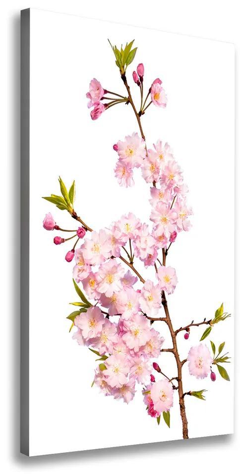 Tablouri tipărite pe pânză Flori de cireș