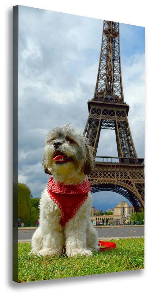 Print pe pânză Câine din Paris