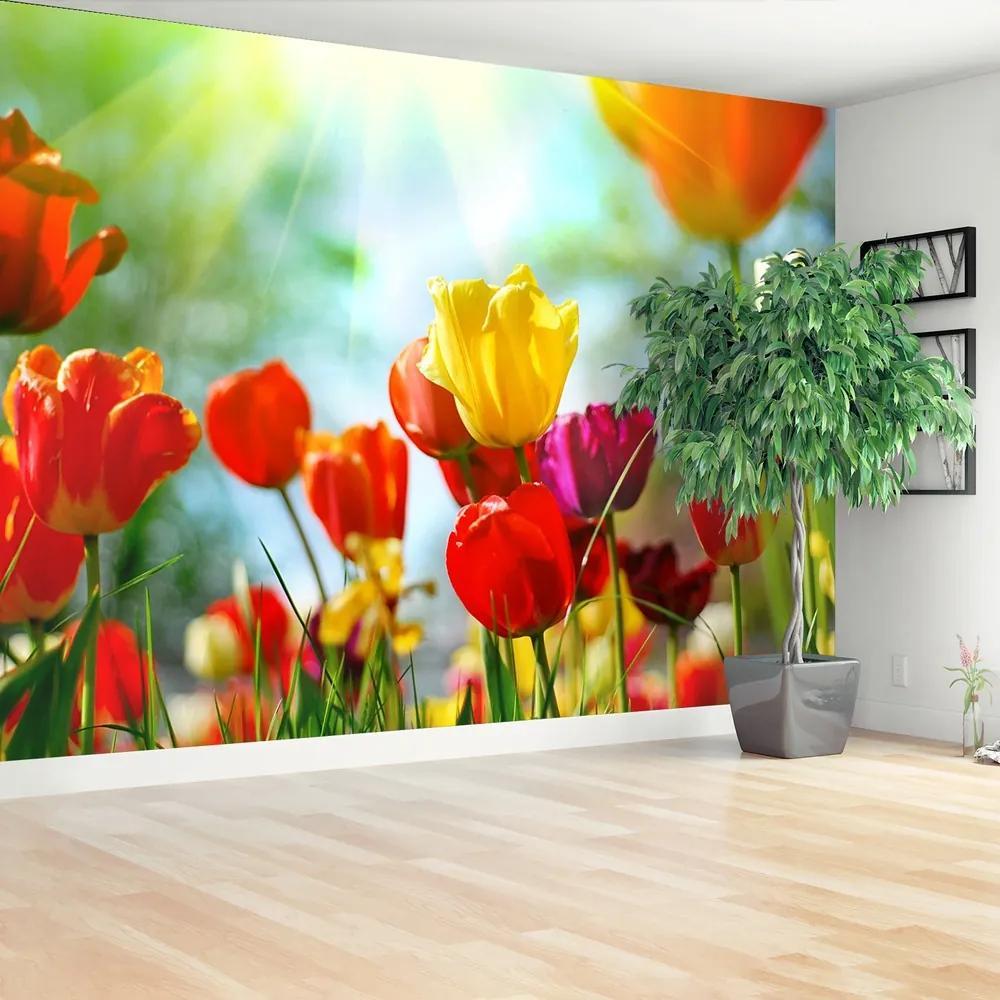 Fototapet Flori de lalele