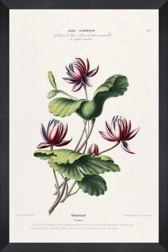 Tablou Framed Art Flore Amerique XIII