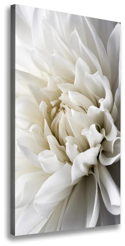 Print pe pânză Dahlia alb
