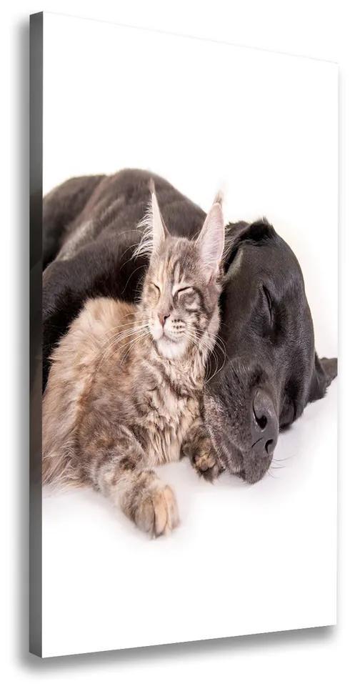 Tablou canvas Câine și pisică