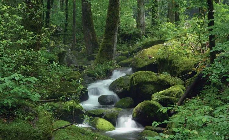 Forest Waterfall Rocks Nature Fototapet, (152.5 x 104 cm)