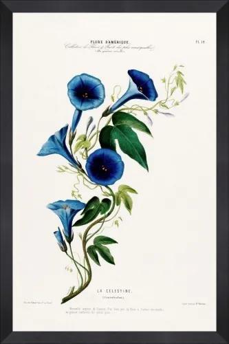 Tablou Framed Art Flore Amerique II
