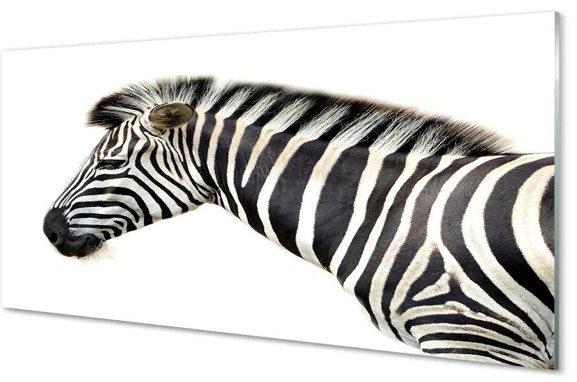 Tablouri acrilice Tablouri acrilice zebră