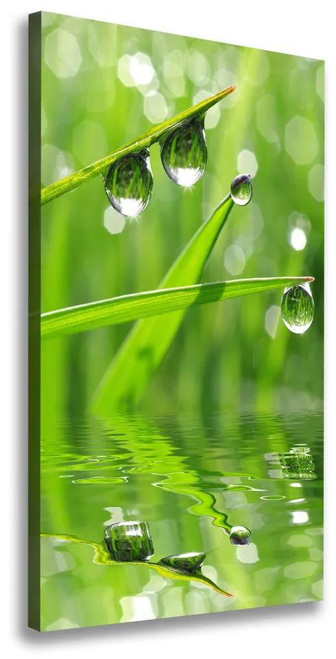 Print pe canvas Lame de iarbă