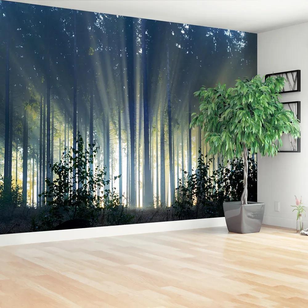 Fototapet molid Forest