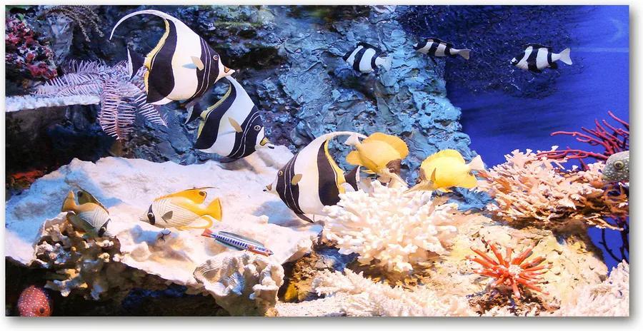 Fotografie imprimată pe sticlă Recif de corali