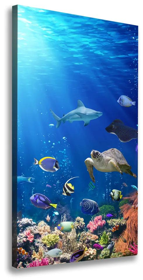Tablou pe pânză canvas Recif de corali