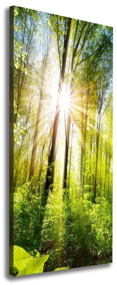 Tablou pe pânză canvas Soare în pădure
