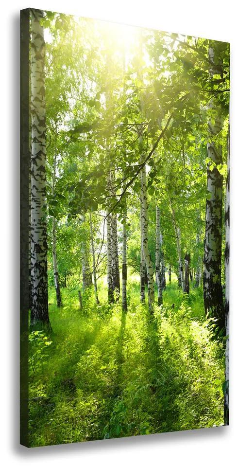 Print pe canvas Pădurea de mesteacăn
