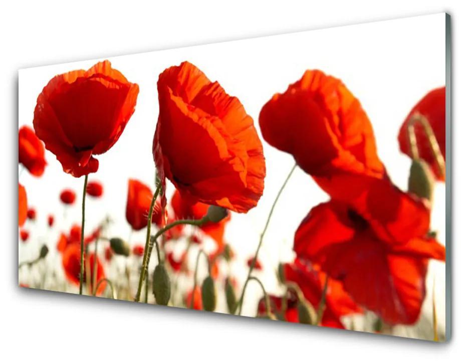 Tablou pe sticla Lalele Floral Red White