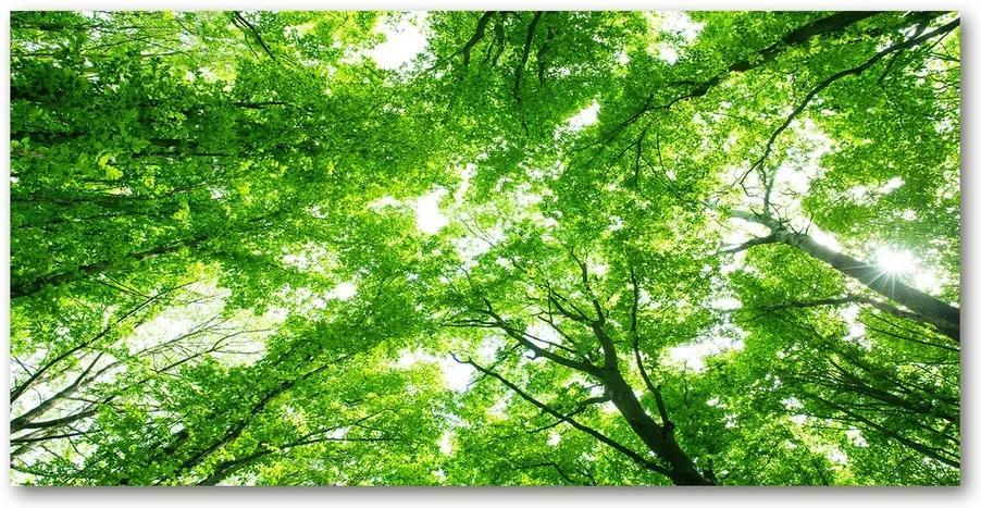 Tablou Printat Pe Sticlă Pădure verde