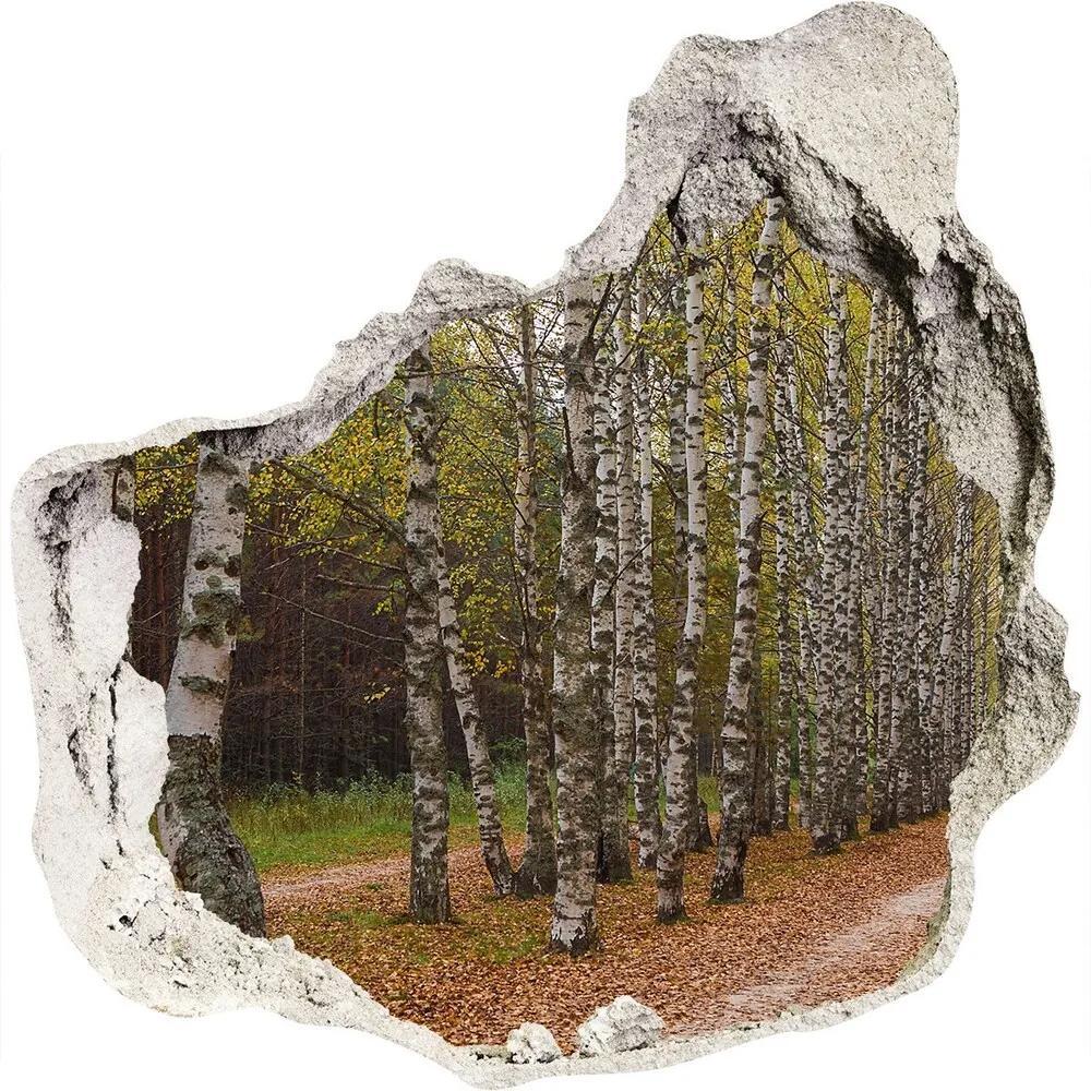 Fototapet 3D gaură în perete Alee de mesteacăn
