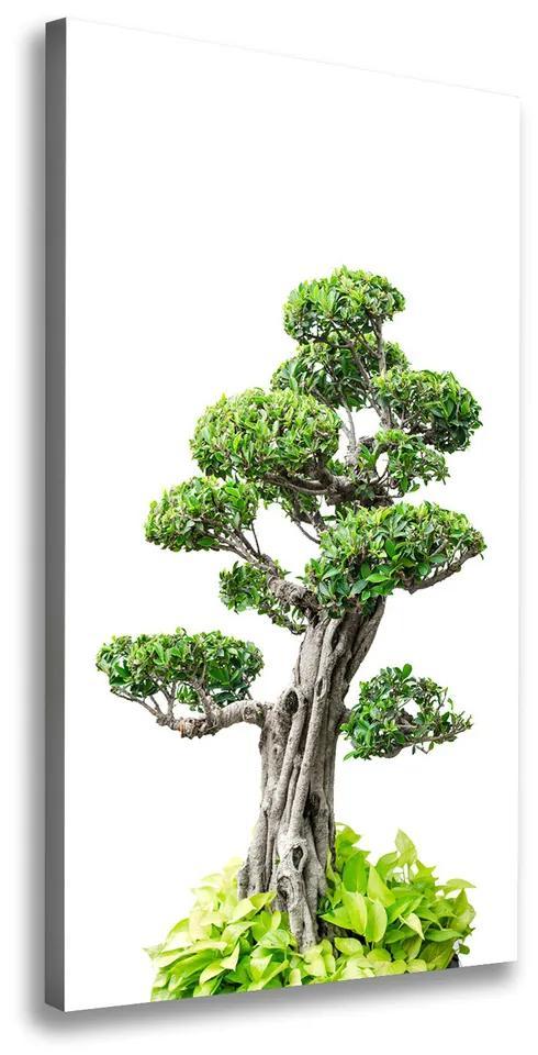 Pictură pe pânză Copac bonsai