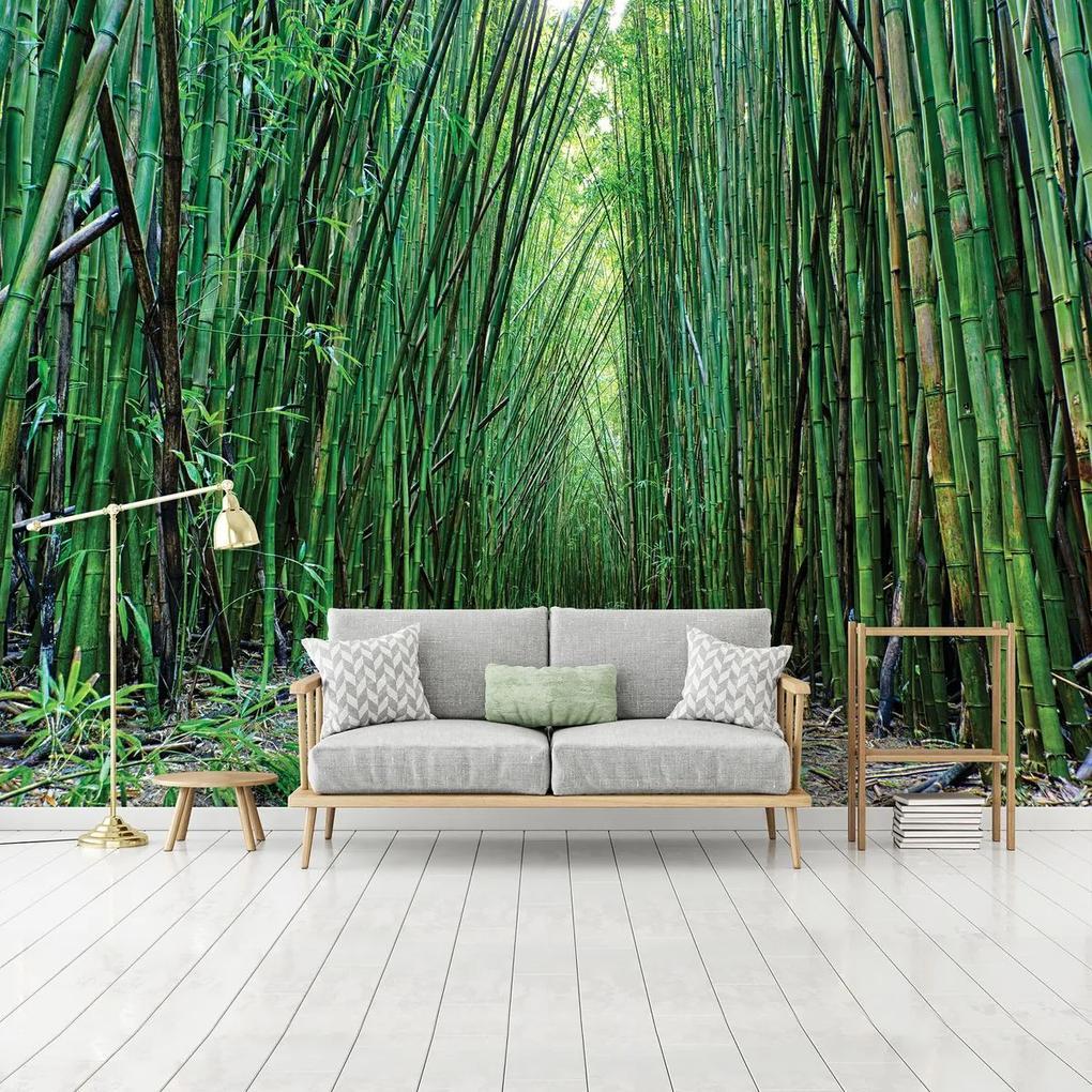 Fototapet - Bambus (254x184 cm), în 8 de alte dimensiuni noi