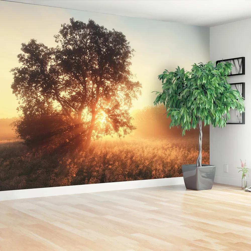 Fototapet Sun copac