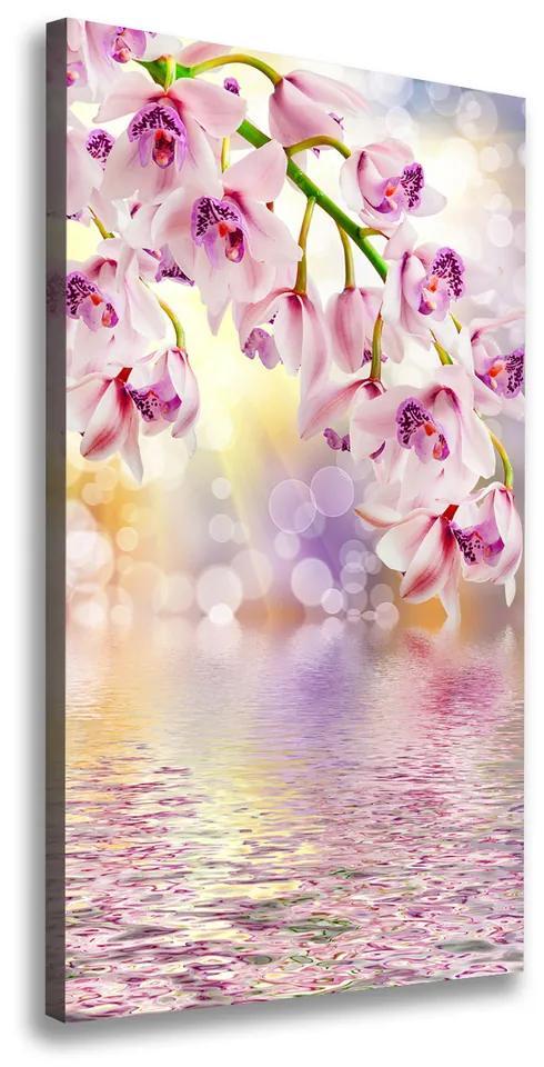 Tablou pe pânză canvas Orhidee