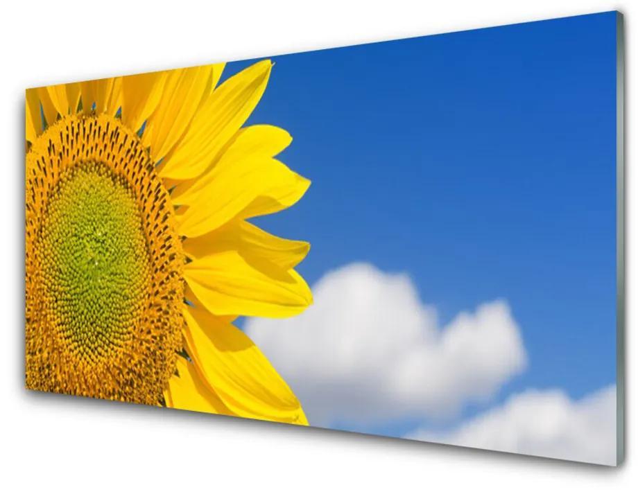 Tablou pe sticla acrilica Nori de floarea-soarelui Floral aur galben albastru