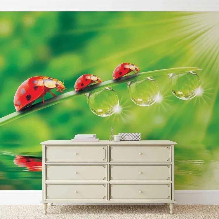 Ladybird Fototapet, (250 x 104 cm)