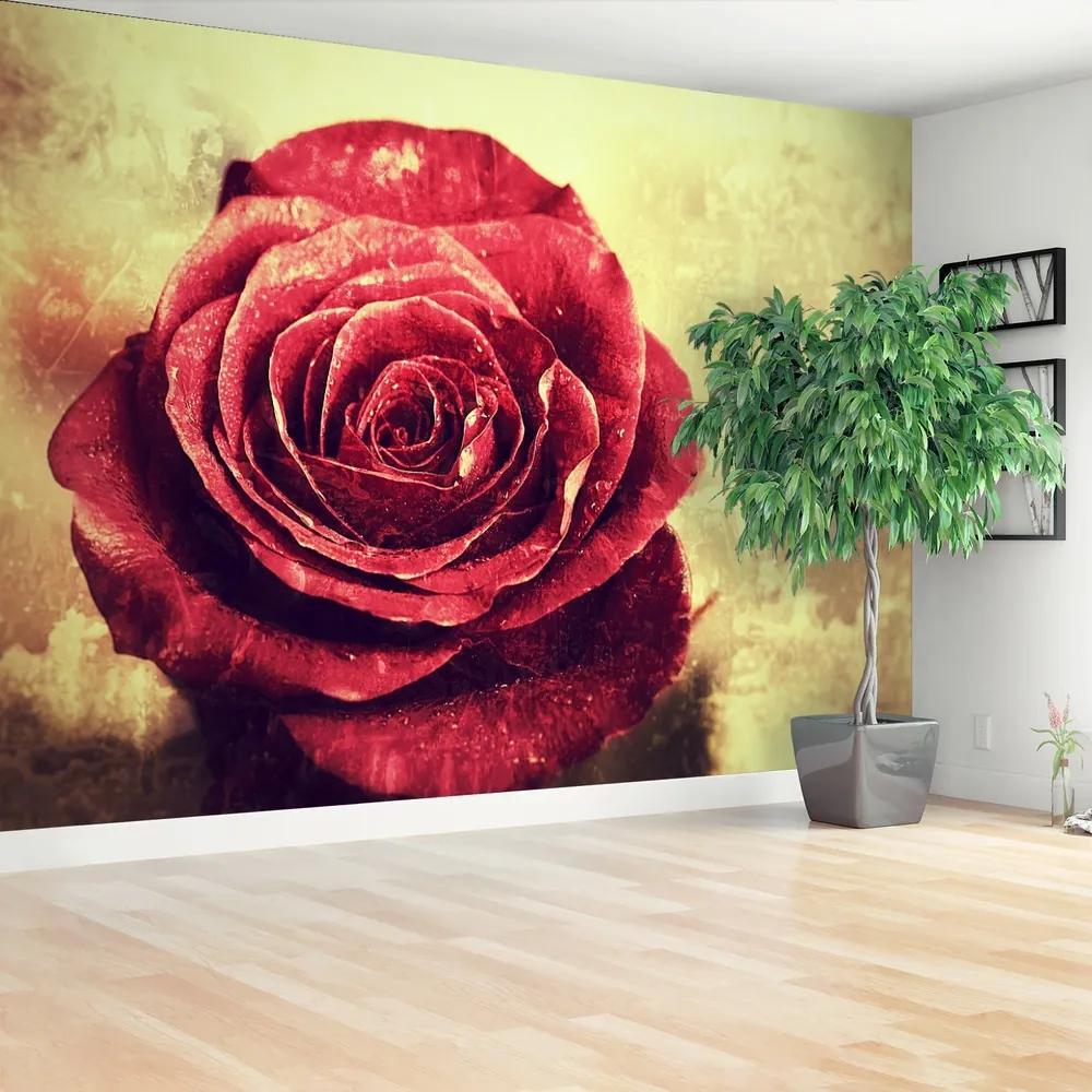 Fototapet Trandafir roșu