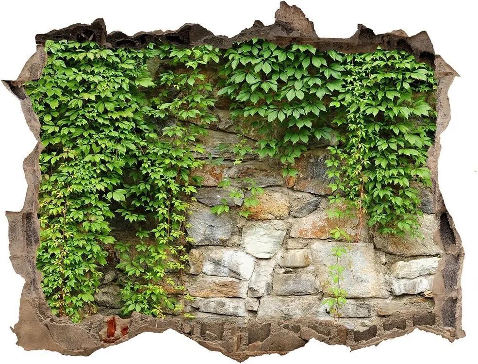 Autocolant un zid spart cu priveliște Iederă verde
