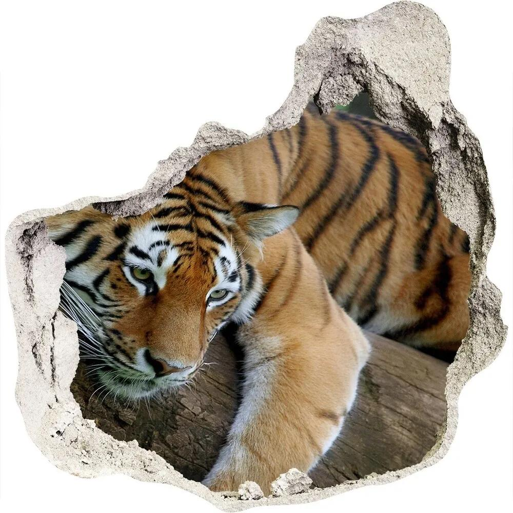 Fototapet un zid spart cu priveliște Tiger pe un copac