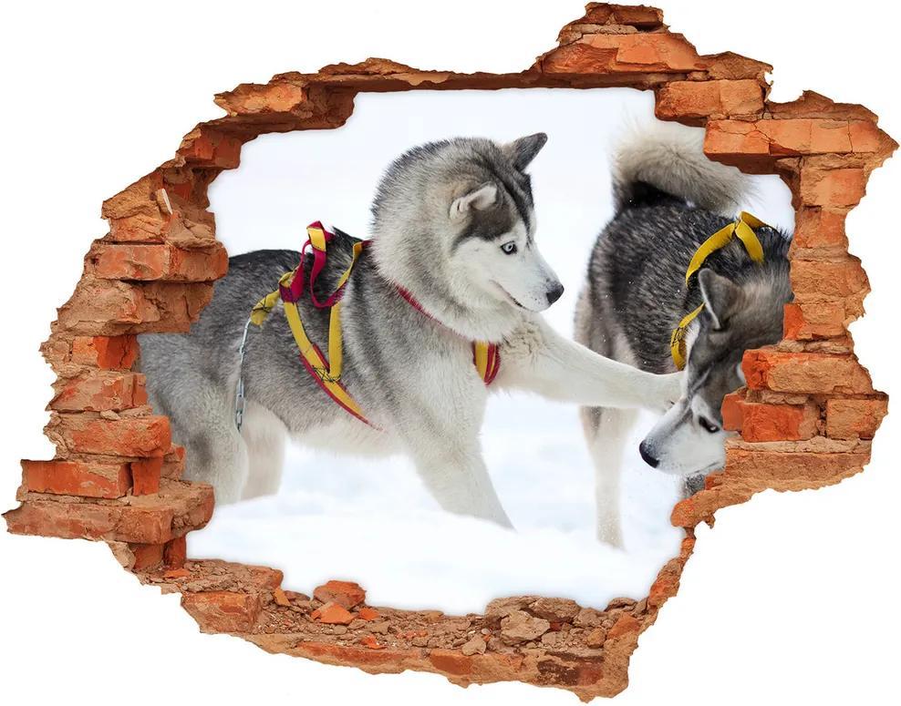 Autocolant un zid spart cu priveliște Iarna Husky