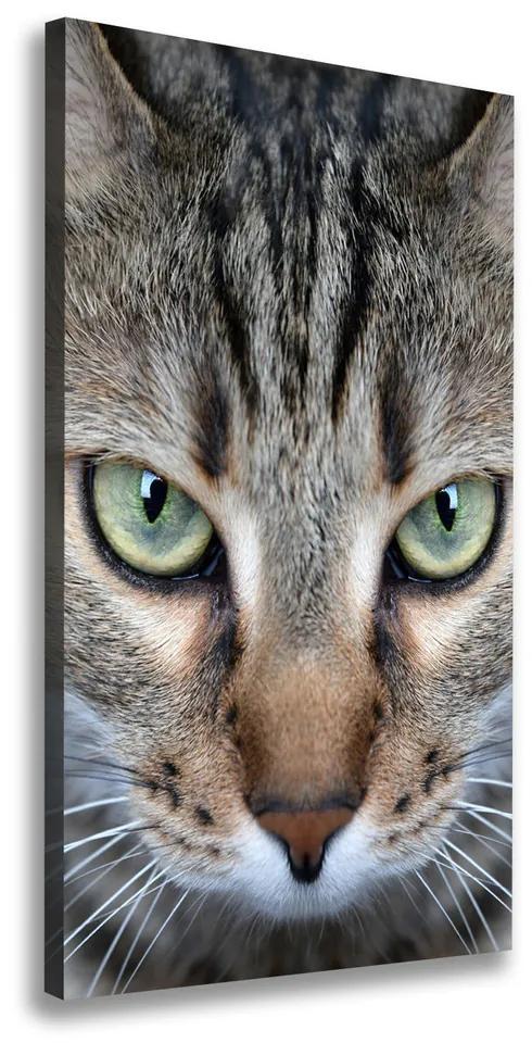 Imprimare tablou canvas Ochi de pisica