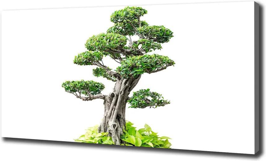 Tablou pe pânză Copac bonsai