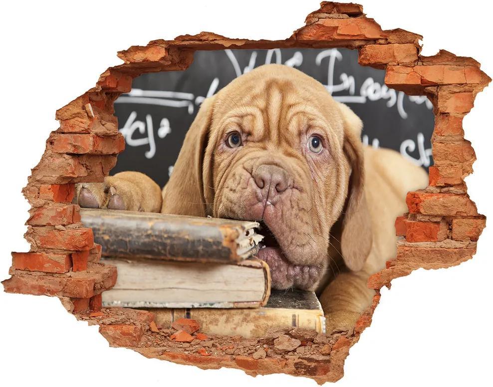 Fototapet 3D gaură în perete Câine musca o carte