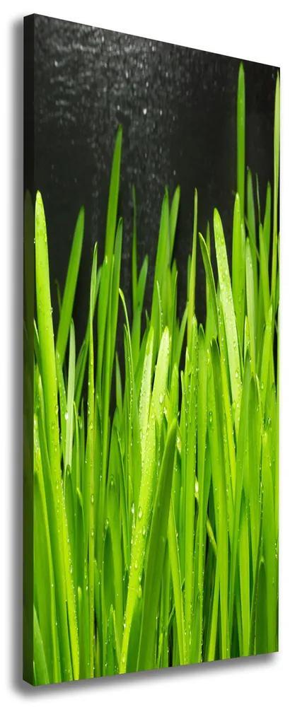 Tablouri tipărite pe pânză Lame de iarbă