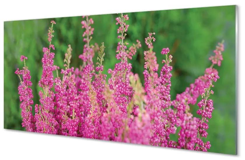 Tablouri pe sticlă flori Heathers
