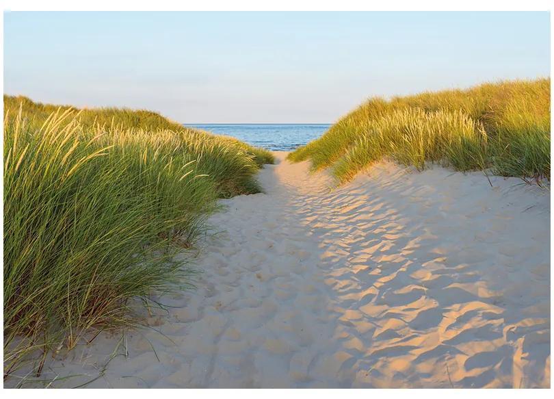 Fototapet plaja - Alee in apus