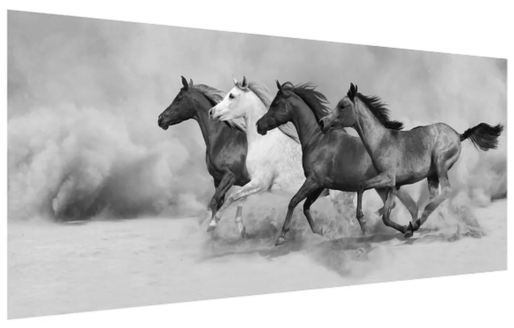 Tablou alb negru cu cai (K012065K12050)