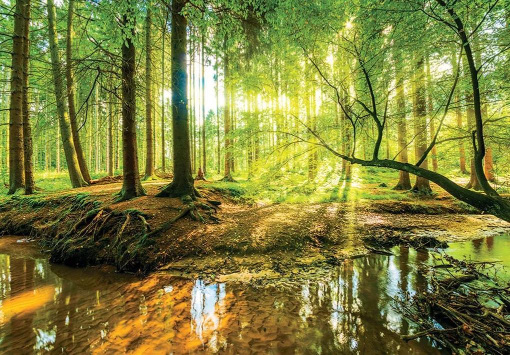 Fototapet - Pădurea însorită (152,5x104 cm), în 8 de alte dimensiuni noi