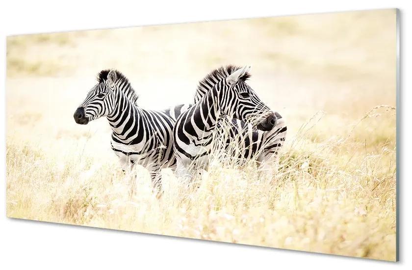 Tablouri pe sticlă caseta de zebră