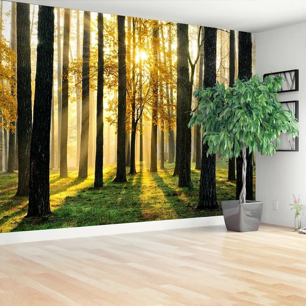 Fototapet Pădure în dimineața