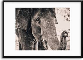 Imagine în cadru - Gentle Giant 40x30 cm