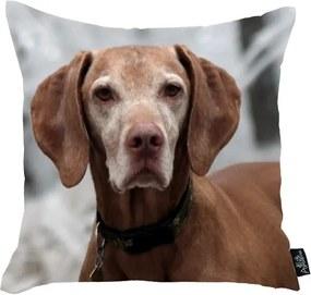 Față de pernă Apolena Doggie, 45 x 45 cm