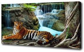 Tablou canvas Tigru cascadă