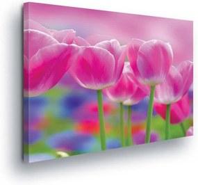 GLIX Tablou - Pink Tulips 100x75 cm