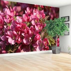 Fototapet Flori de cireș