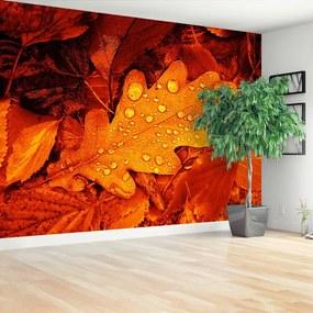 Fototapet frunze de stejar