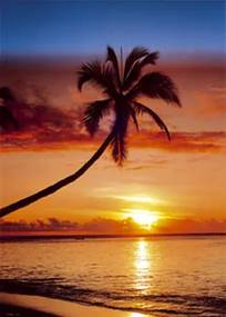 Sunset & palm tree Poster, (61 x 91,5 cm)
