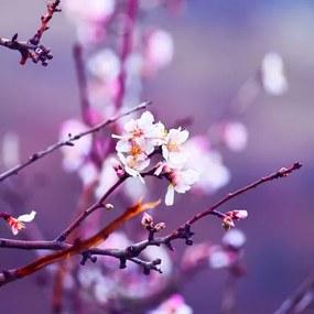 Falc Tablou pe pânză - Amethyst flower II., 30x30 cm