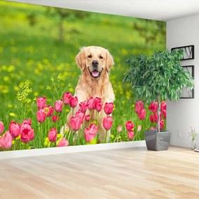 Fototapet Dog Lalele